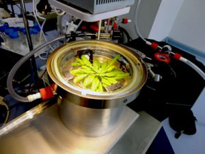 measuring plant metabolism